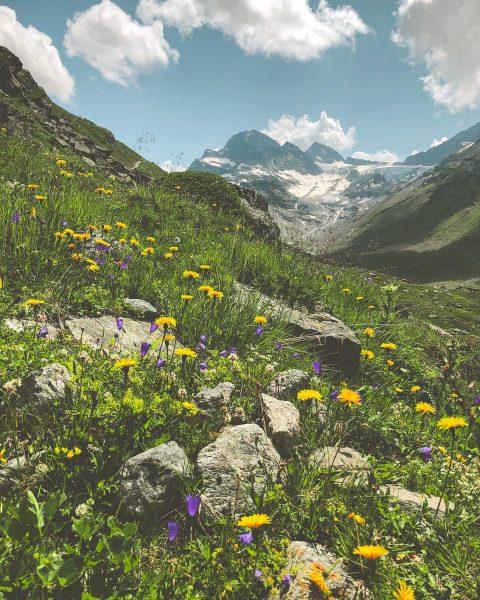 Zauberhafte Bergwiesen und die Alpen in voller Blütenpracht. 🌿🌼 Bist Du schon einmal ...