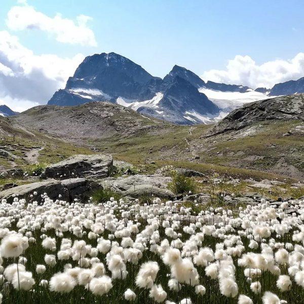 Fluffige weiße Wiesenbewohner und der höchste Berg Vorarlbergs.🏔️💮 #rauszeit #montafon #rauszeitmontafon #achtsamkeit #meinmontafon ...