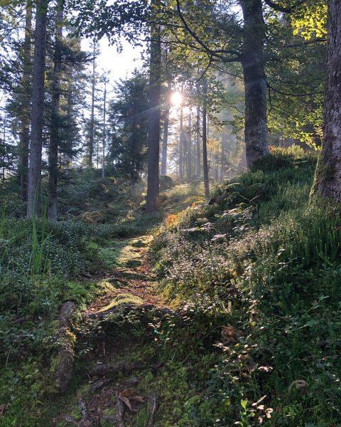 so kann der September sehr gerne bleiben ☀️⛰🏃🏼😊 @gipfelchallenge #jederhöhenmeterzählt #bergliebe #herbsttage #sonnenschein ...