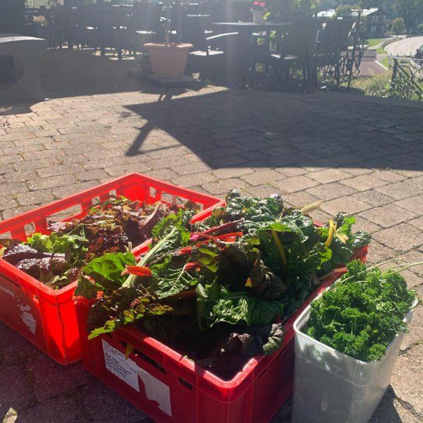 CHRUUD,BLÜAMLE ond ERDÖPFL am 26.09.2021 bei uns im Wirtshaus Hoheneck! Heute wurden frische Blattsalate, bunter Mangold und...