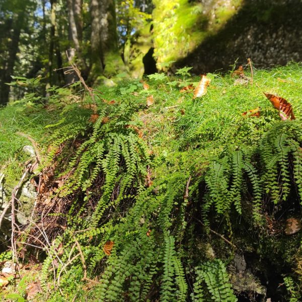 Just nature ... #wald #imwald #ruhen #bregenzerwald #voralberg #ländle #timewithfriends #ichzeit Hittisau