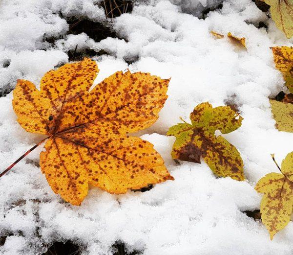 #Herbstschnee #herbstlaub #herbstindenbergen #kleinwalsertal #wanderlust #herbstfarben #snowinfall Kleinwalsertal Österreich