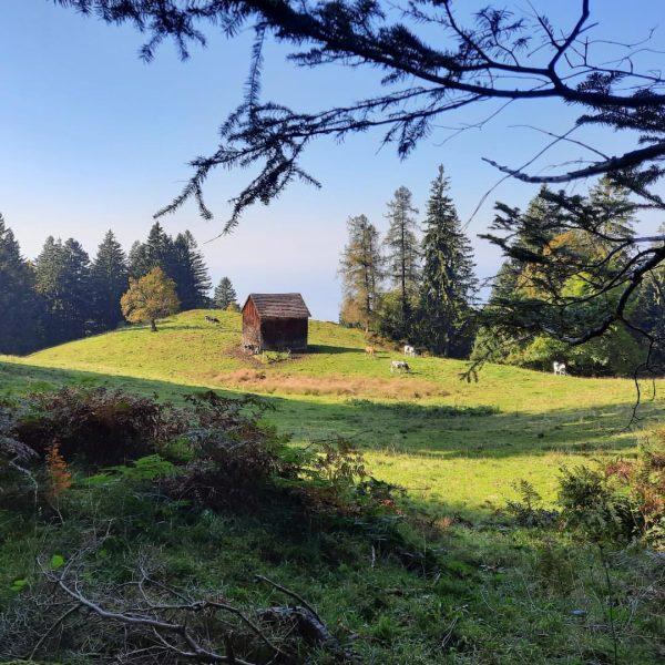 Wandertag 💚 #pfänder #oesterreich #austria #alpen #alps #berge #mountains #hiking #wandern #herbst #fromwhereistand ...