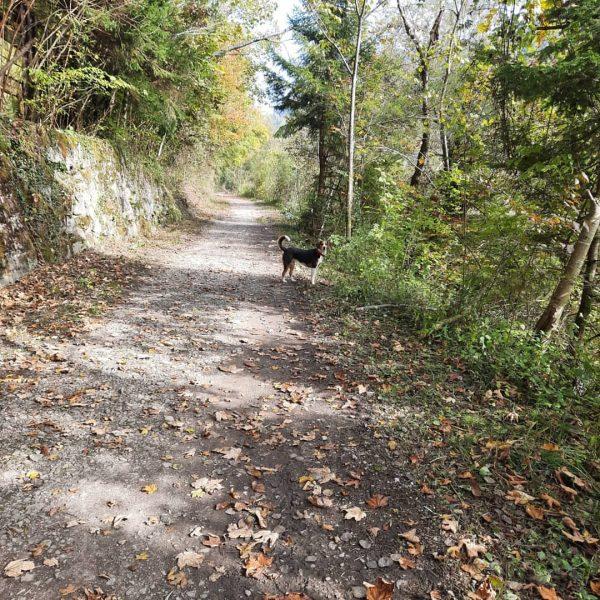 Besonders im Herbst ist der Bregenzerach Wanderweg ab Kennelbach wunderschön. Weitere schöne Ausflüge ...