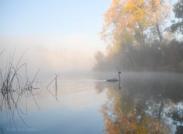 Morgenstimmung am Alten Rhein #nebel #nebelstimmung #alterrhein #hohenems #wasser #bäume #landschaft #landschaftsphotographie #landschaftsphoto ...