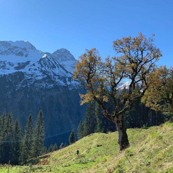 Den (Augen)Blick genießen #bergwelten #bergwiese #kleinwalsertal #mittelberg Kleinwalsertal Österreich