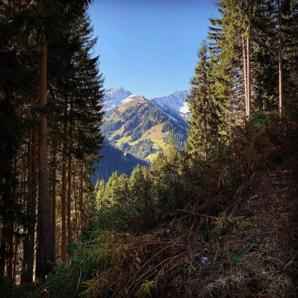 Zwischendurch #waldundberge #bergwelten #mittelberg #kleinwalsertal Kleinwalsertal Österreich