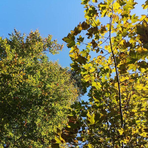 Ein wunderschöner Familien - Herbstspaziergang vom Gewerbepark Rankweil über Egelsee zur Basilika Rankweil ...
