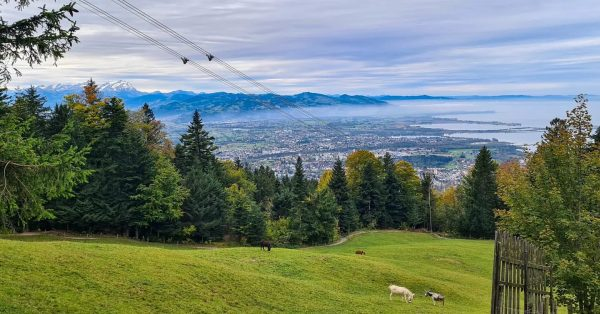 Ausflug zum Pfänder, dem Hausberg von Bregenz. #austria #bregenz #lochau #pfänder #bodensee #alpen ...